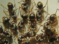 Marching Ants Stock Jusben