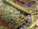 Small Water Creek