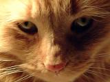 Aries the Cat Portrait