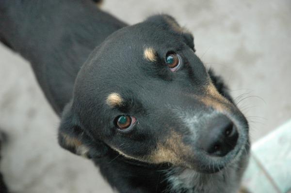 Maya The Dog