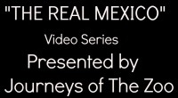 The Real Mexico Video Series Button Thumbnail