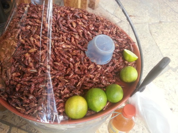 Fried Grasshoppers Mexico