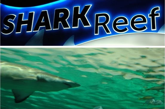 Ripleys Aquarium of Canada-Shark Reef
