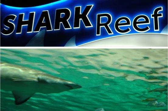 Ripleys Aquarium of Canada-Shark Reef
