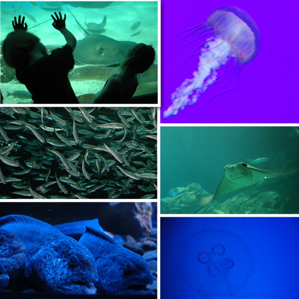 Ripleys Aquarium of Canada-Various Aquatics