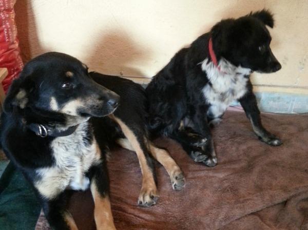 Sterilization Clinic Street Dogs
