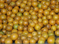 Stock-Oranges Mexico1