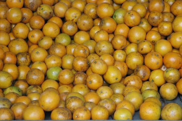 Stock-Oranges Mexico1
