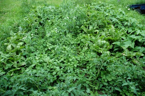 Garden Full of Weeds