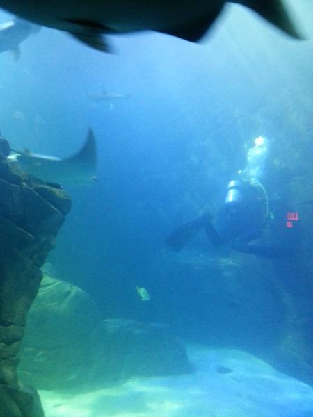 Ripleys Aquarium of Canada-Diver Cleaning Tank-600