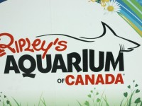 Ripleys Aquarium of Canada Graphic